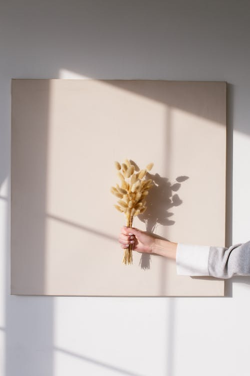 Person Holding White and Brown Flower Painting