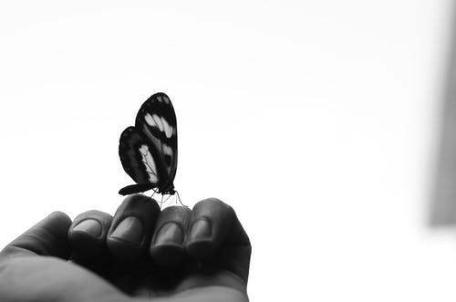 Black and white of crop anonymous person showing butterfly with ornament on wings sitting on hand