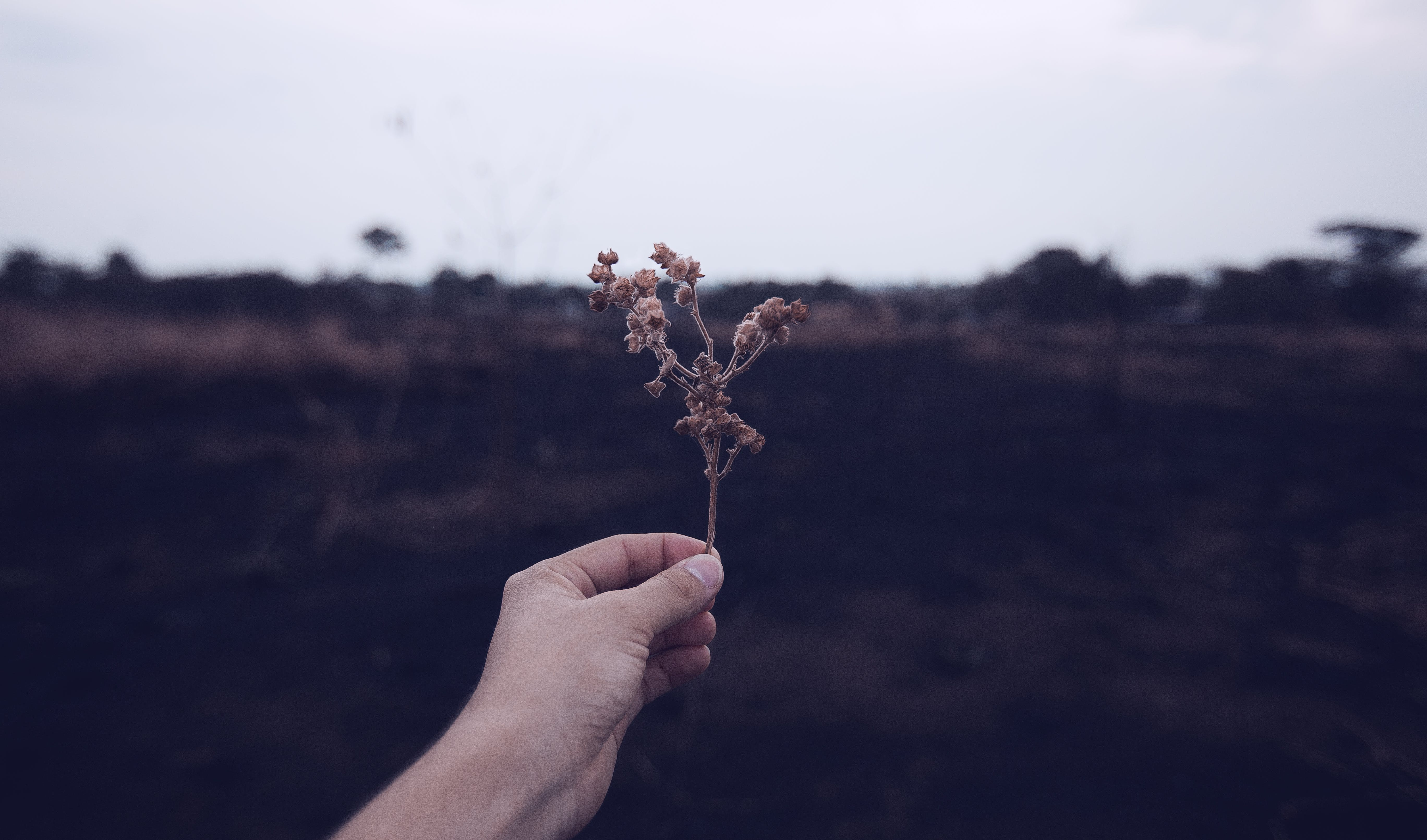 Person Holding Brown Plant Stem