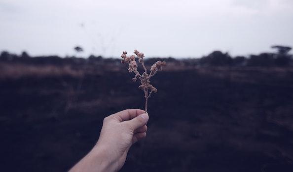 Free stock photo of hand, holding, macro, life
