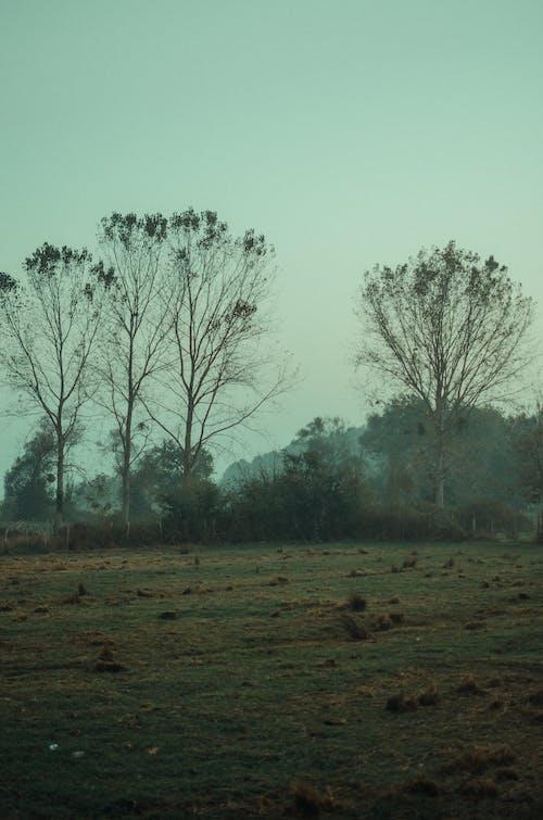 冷靜, 和平的, 和諧 的 免費圖庫相片