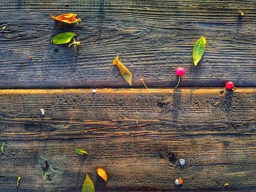 คลังภาพถ่ายฟรี ของ เชอร์รี่, แบบแผน, ไม้