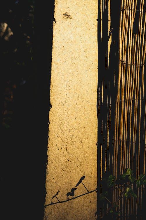 アート, コンクリート, ツタの無料の写真素材