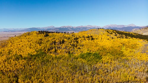Free stock photo of aerial, aspens, countryside