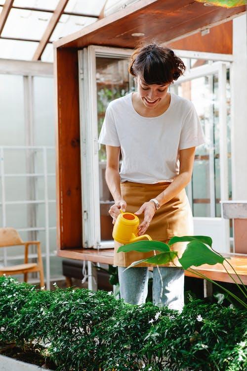 Female employee watering plants in greenhouse