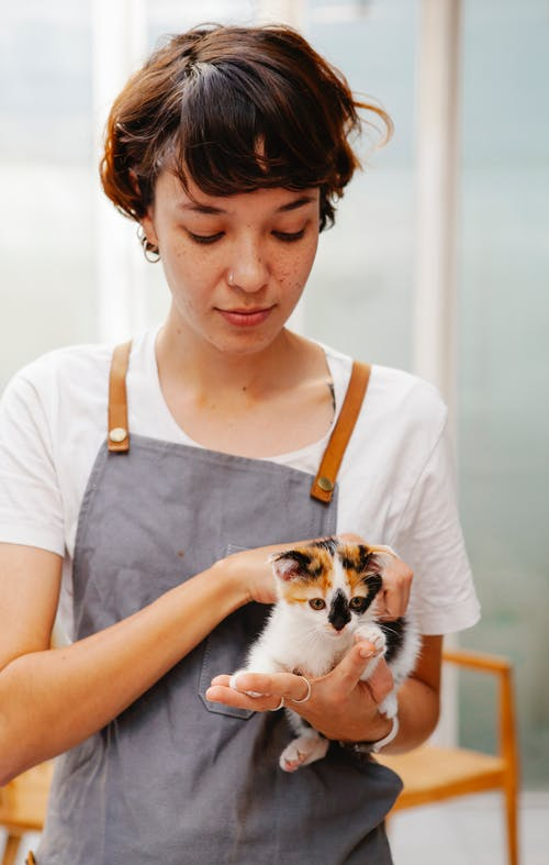 Employee caressing cute kitten with spotted fur