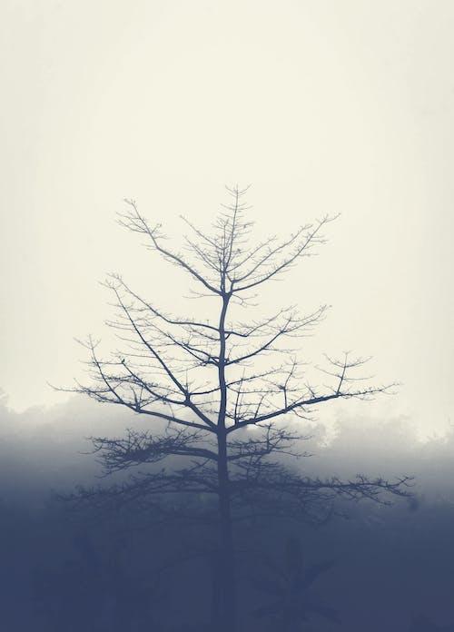 Free stock photo of bangladesh, foggy morning, tree