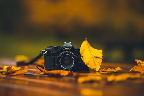 Kostenloses Stock Foto zu canon, gelb, herbst