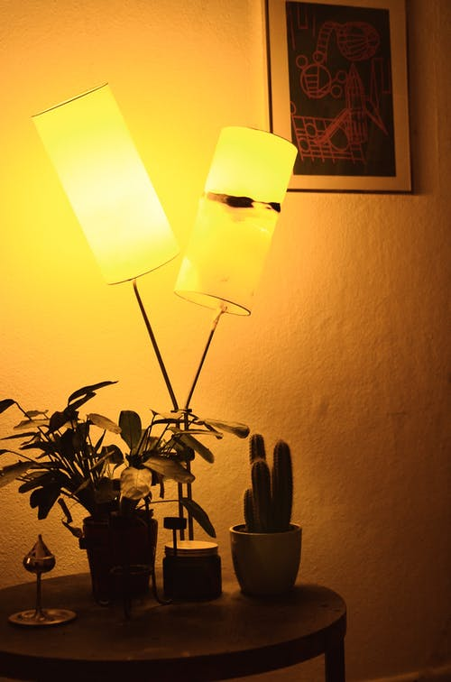 Lamp illuminating in dark room placed on table near potted houseplants in apartment
