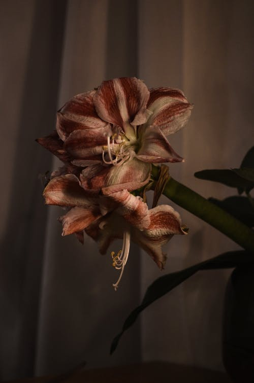 Delicate flower in dark room