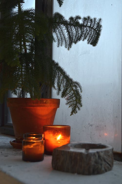 Small candle in glass placed on windowsill near potted green plant of araucaria