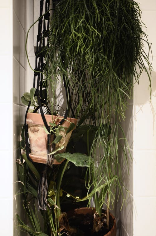 Potted plants placed in bathroom corner