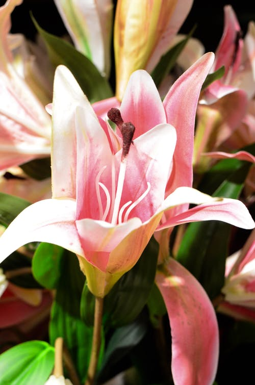 Immagine gratuita di angiosperme, aroma, bagliore