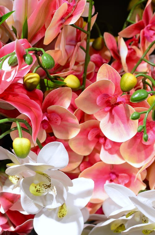 Decorative bright blooming orchids with wavy petals