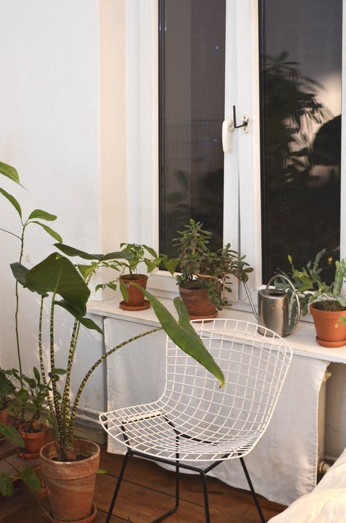 Metal chair between collection of tropical plants with thin stems and lush leaves growing in house
