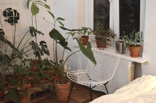 Assorted exotic plants in pots at home