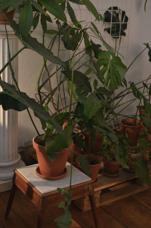 Pots with different tropical plants with thin stems and lush green foliage growing in house