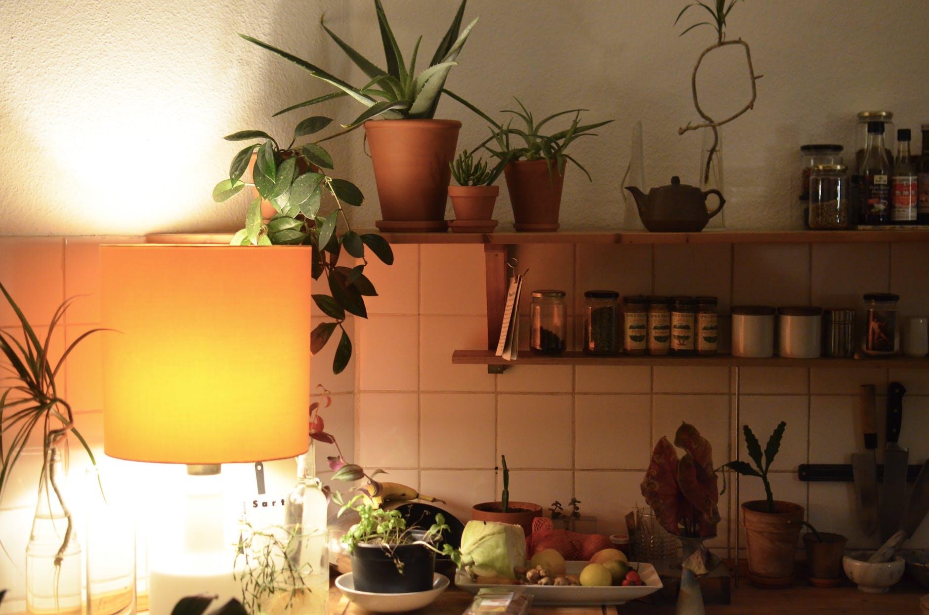 Топ-10 кращих кімнатних рослин