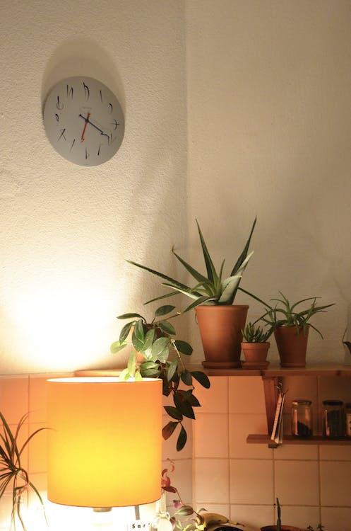 Gratis lagerfoto af Aloe, asparges, assorteret