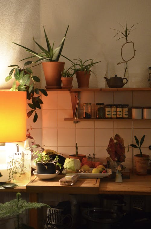 Interior of cozy kitchen with decorative verdant plants in pots and fresh vegetables with fruits on table