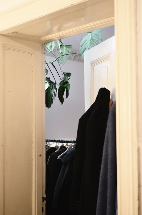 Wardrobe with many clothes on metal hangers and monstera with verdant fresh leaves