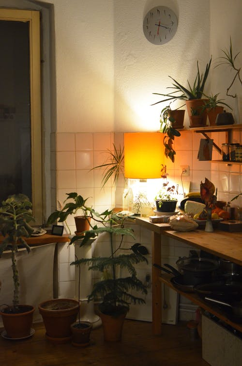 Comfortable kitchen with many verdant plants in pots and kitchenware in dim light of lamp on wall