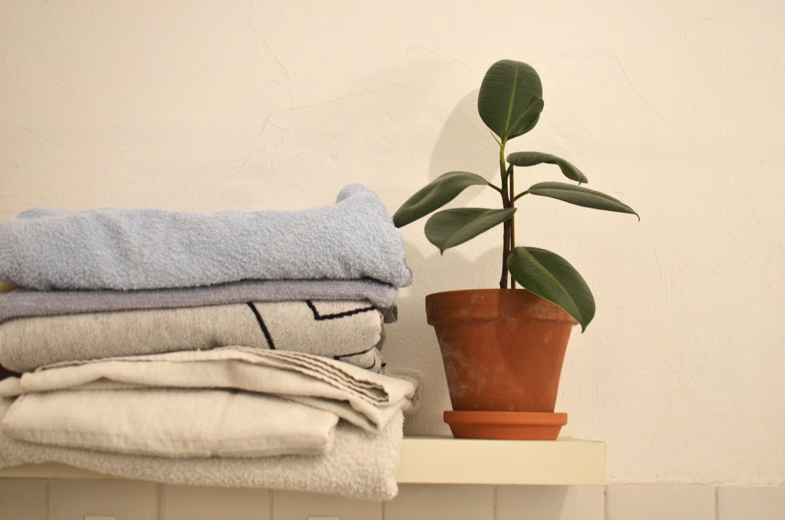 Potted green ficus arranged with stack of towels