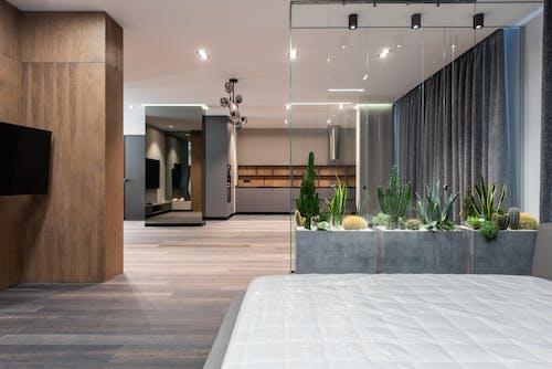 Modern interior of big studio with houseplants