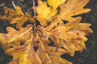 wood, yellow, leaf