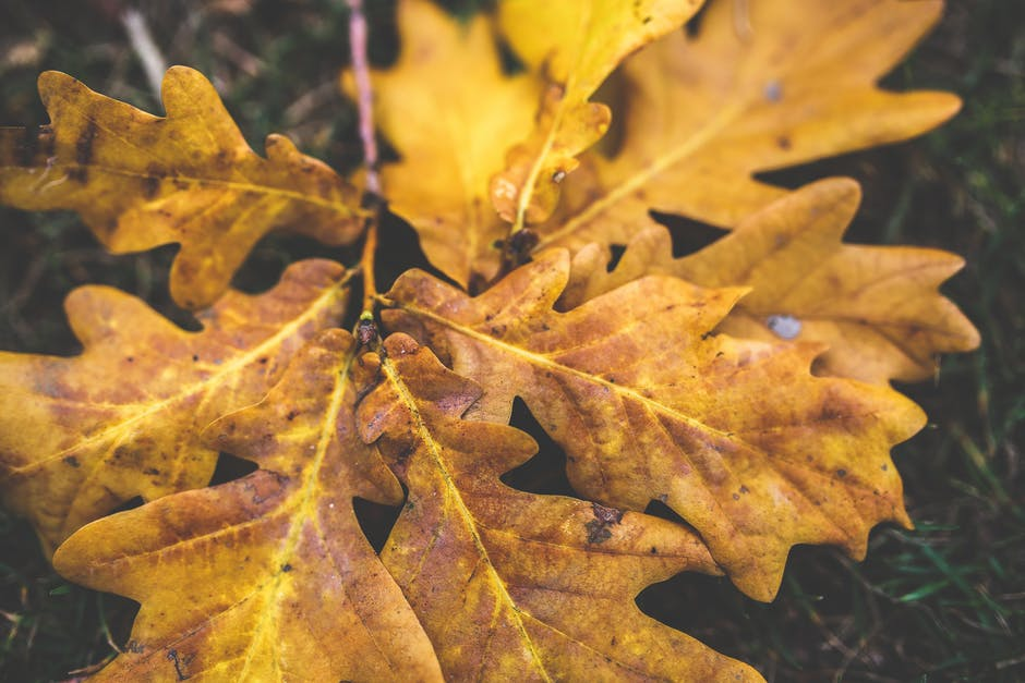 New free stock photo of wood, yellow, leaf
