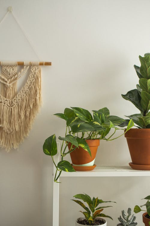 Assorted potted plants on shelf near decor at home
