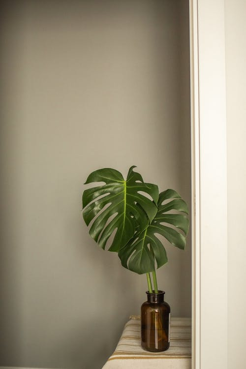 Tropical green plant with thin stems and wavy leaves in vase near wall in house