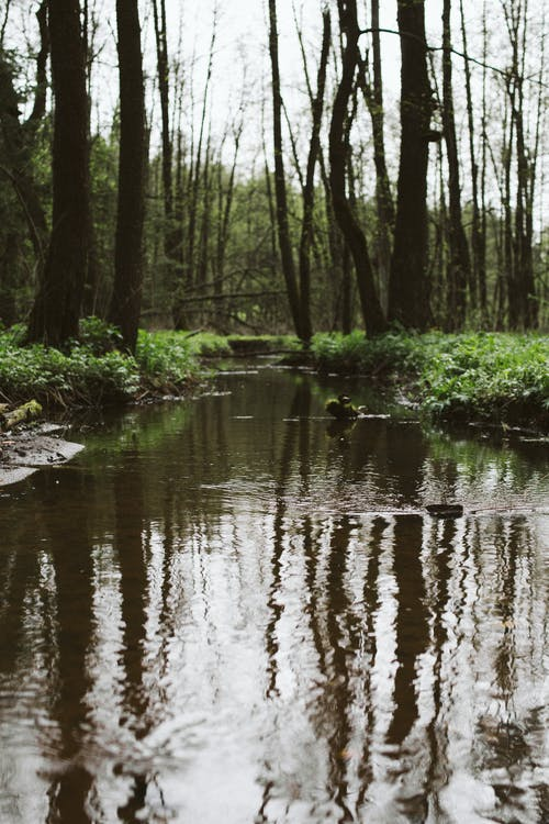Calm brook flowing through lush summer forest