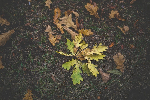 Dirty autumn leaves