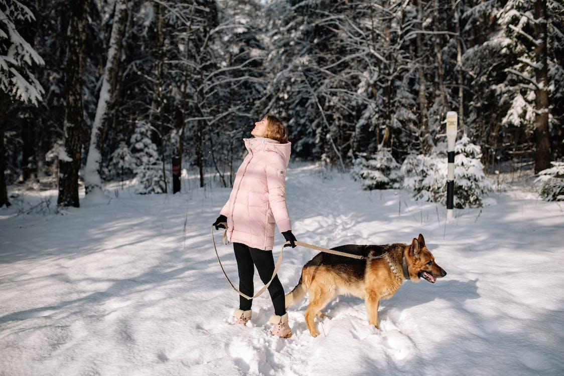 Free stock photo of child, cold, dog