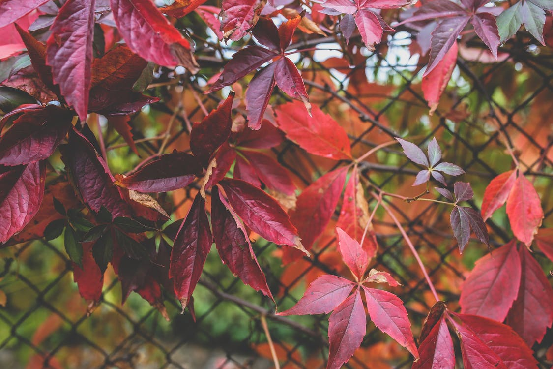 årstid, farge, flora