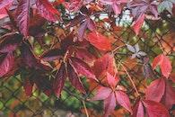 red, summer, garden