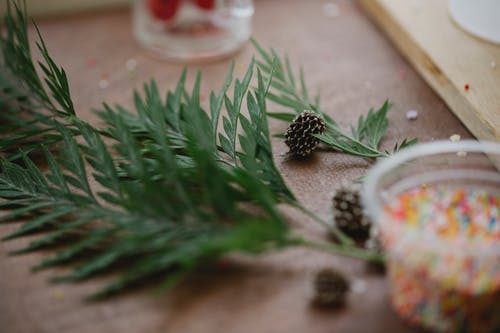 Evergreen plant sprigs and cones on table