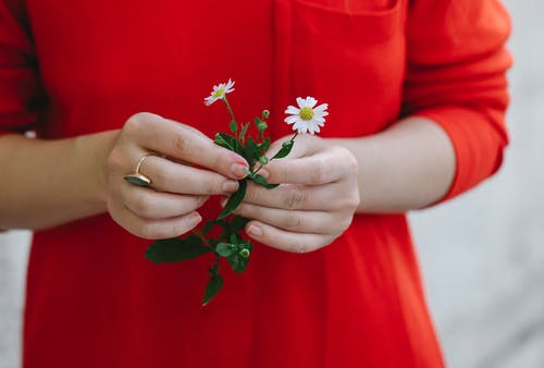 Crop faceless woman holding delicate chamomile flowers