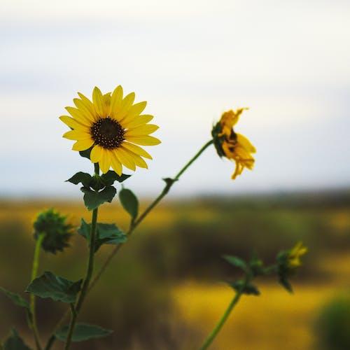 Kostnadsfri bild av äng, blad, blomma