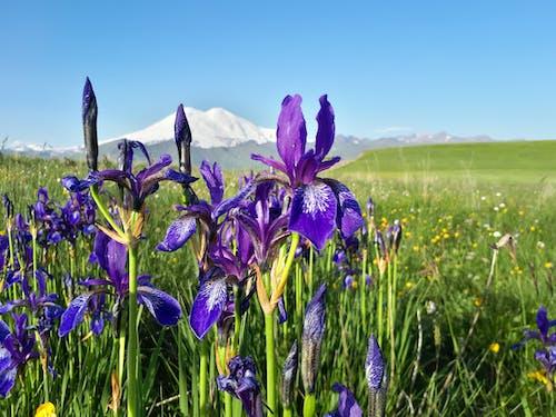 Foto profissional grátis de áreas, campos, caucasiano