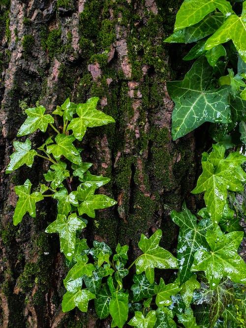 Foto profissional grátis de beleza natureza, casca de árvore, chuva