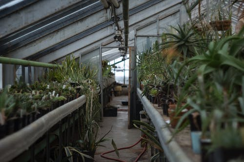 Assorted potted plants cultivated in greenhouse