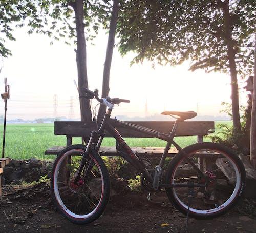 คลังภาพถ่ายฟรี ของ mtb, จักรยาน, ดวงอาทิตย์, ธรรมชาติ