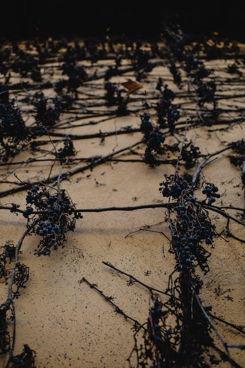 Black Plant on Brown Sand