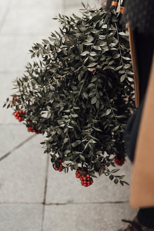 High angle of crop anonymous person with bunch with branches of rowan with red berries