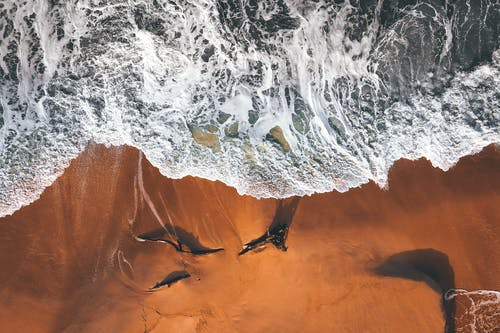 Drone view of orange sandy coast with broken trees washed by foamy waving sea water