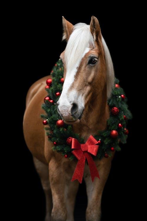 Free stock photo of black, christmas, christmas ball