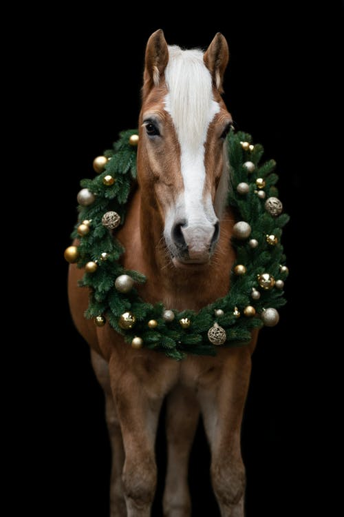 Free stock photo of black, brown horse, christmas
