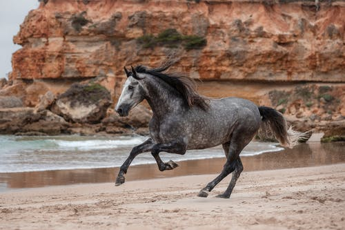 Brown Horse Running on Brown Sand